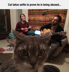 - LOLcats is the best place to find and submit funny cat memes and other silly cat materials to share with the world. We find the funny cats that make you LOL so that you don't have to. Memes Humor, Funny Animal Memes, Funny Animals, Cute Animals, Silly Cats, Crazy Cats, Cats And Kittens, Cute Cats, Funny Images