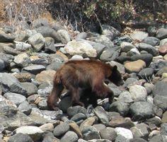 h Brown Bear, River, Rivers