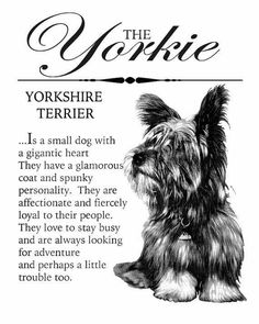 Cute Puppies, Cute Dogs, Corgi Puppies, Yorky, Poodle Grooming, Teacup Yorkie, Dog Grooming Business, Yorkshire Terrier Puppies, Yorkie Puppy