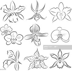 Line Drawing Tattoos, Flower Line Drawings, Flower Sketches, Tattoo Drawings, Art Sketches, Tattoos Orquideas, Frida Kahlo Artwork, Orchid Flower Tattoos, Orchid Drawing