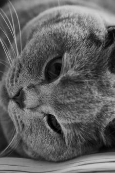 New free photo from Pexels: https://www.pexels.com/photo/cat-in-greyscale-photo-162064/ #black-and-white #animal #pet