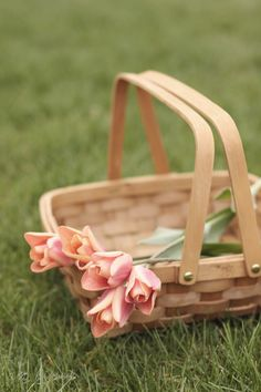Decorative Gifts Picnic Basket with Easy Carrying Handles for sale online Peach Trees, Peach Blossoms, Farm House Colors, Shades Of Peach, Peach And Green, Sweet Peach, Just Peachy, Duck Egg Blue, Color Rosa