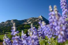 #crestedbutte #wildflowercapitalofcolorado #mountainvibes #wildflowers #summer #cbcolors Photo: Chris Segal