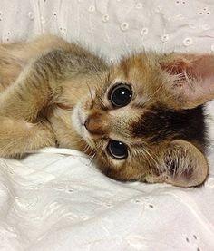 Awwww So sweet <3