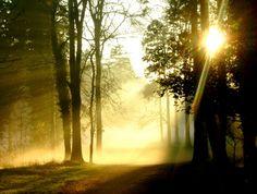 Misty Donadea Forest in Ireland