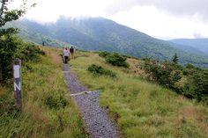 Appalachian Trail Roan Mountain, North Carolina Day Hiking Trails
