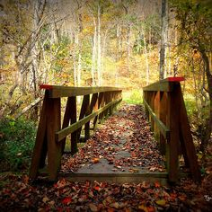 """""""Over the bridge""""-autumn  by Tgarlick"""