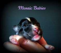 Mosaic Baby  Photo taken by Chance Photography Canada