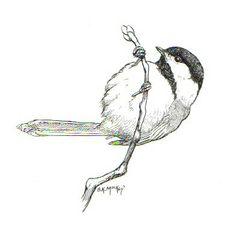 Black and white chickadee