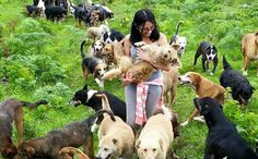 "Costa Rica's ""Land Of The Strays"" Is Pretty Much Paradise For Dog Lovers"