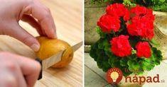 11 netradičných využití zemiakov, o ktorých ste dosiaľ netušili. Celery, Watermelon, Remedies, Herbs, Gardening, Fruit, Vegetables, Food, Gluten Free