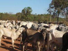 Cadeia produtiva da pecuária sobe 27% e movimenta R$483,5 bilhões - http://po.st/b8wXpX  #Setores - #Agro, #Pecuária, #PIB