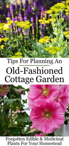 How to Design a Cottage Garden - Forgotten Medicinal & Edible Plants