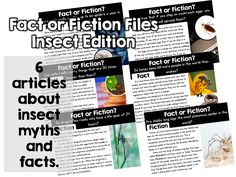 Ginger Snaps: Fact or Fiction Files {Insect Edition}
