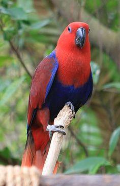 papagei arten papagei kaufen papagei als haustier