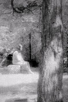bachelor's grove cemetery | ... : The Most Haunted Cemetery in the Midwest, Bachelors Grove Cemetery