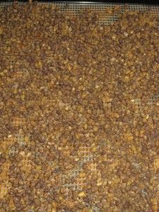 How to Increase Nutrition By Dehydrating Soaked and Dried Mung Beans in Dehydrator  #dehydrating