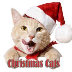 cats christmas | Christmas Cats by Christmas Songs on Spotify