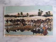 6108 Scénes et Types. troupeau de Chameaux