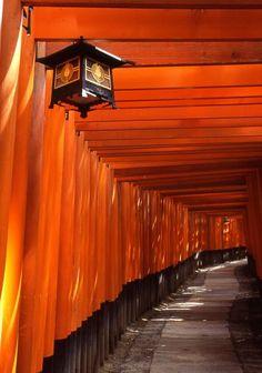 Fushimi-Inari Kyoto, JAPAN - great color reminded me of Orange Brown, Orange Yellow, Orange Color, Orange Twist, Burnt Orange, Orange You Glad, Orange Is The New, Orange Aesthetic, Sun Aesthetic