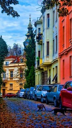 Belgrade, Serbia Serbo Croatian, Serbian, Best Places To Travel, Places To Visit, Serbia And Montenegro, Belgrade Serbia, Novi Sad, Backpacking Europe, Most Beautiful Cities