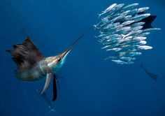 Sport fishing | Offshore Fishing | Onshore Fishing | Inshore ...
