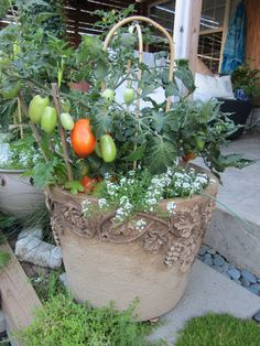 Hybrid of tomato developed especially for container planting. #ContainerGardening #TomatoesInPots