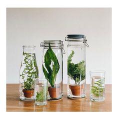 Olha que dica bacana para plantas aquáticas!  A inspiração vem do @f_o_l_h_a_paisagismo o novo blog integrante do #olioliteam  #ideia #paisagismo #plantas #decor #decoracao #diy #facavocemesmo