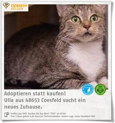 Ulla kam als Fundtier ins Tierheim Coesfeld.  http://www.tierheimhelden.de/katze/tierheim-coesfeld/hauskatze/ulla/12875-1/0  Ulla ist lieb, verschmust und nun auf der Suche nach neuen Dosenöffnern.