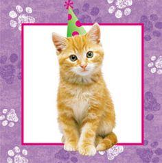 Cuddly Kitten beverage napkin - birthday party supplies