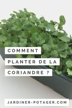 Online shopping from a great selection at Patio, Lawn & Garden Store. Potager Garden, Herb Garden, Lawn And Garden, Indoor Garden, Vegetable Garden, Outdoor Gardens, Sun Plants, Green Plants, Comment Planter