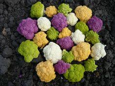 Risultati immagini per bei fiori