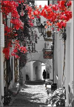 Lovely European Town in Color Splash of Red Bougainvillaea