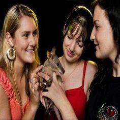 케언즈 ● 나이트 주(Cairns Night Zoo)