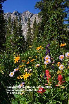 McCullough Gulch, Quandary Peak and wildflowers, near Breckenridge, Colorado