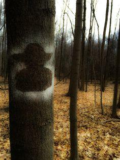 Yoda Trunks, Plants, Photography, Drift Wood, Photograph, Tree Trunks, Fotografie, Photoshoot, Plant