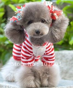 36 Best Cute Dogs Dress Up Images In 2019 Cute Puppies Cute Dogs