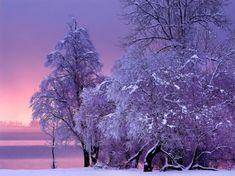 Purple Winter - Winter & Nature Background Wallpapers on Desktop ...