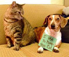 «Ho violentato questo gatto» (Dogshaming.tumblr.com)