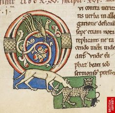 Detail of decorated initial 'Q'(ui) with foliate motifs, clasps, a cock, a dog biting a cat and a cat carrying mice from Moralia in Job, (Germany, W. (Arnstein), 2nd half of the 12th century) shelfmark Harley 3053 f. 56v,   British Library Board.
