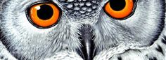 Guiajato.com : capa facebook