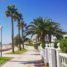 A boulevard in Spain 😍. #summer #beach #beautiful #boulevard #Spain #palmtrees #goodday #instagood #travelling #travelgram #travel #follow #travelaffordable #love