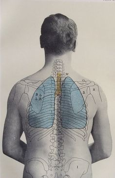 Antique 1900s Medical Diagram Scientific Print Human Anatomy Lungs Back 1908 | eBay.