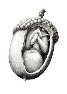 bébé dans une noisette