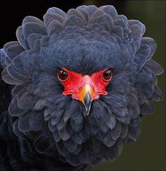 Desafío. #animals #aves