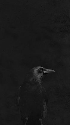 Raven in Black - Rabe in Schwarz Arte Viking, Yennefer Of Vengerberg, The Ancient Magus, Crows Ravens, Foto Art, Monochrom, Shades Of Black, Color Negra, Black Is Beautiful
