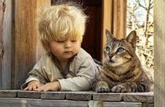 blonde cat images - Google Search