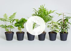 How to repot a plant via @PureWow I just repoted my planters and the plants are getting accustomed to their new digs!