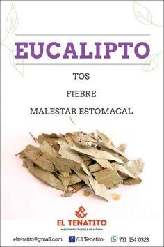 Plantas medicinales - Eucalipto