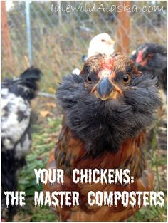 The Composting Chicken Machine Your Chickens - The Master Composters - IdlewildAlaska Compost Bin AK Food For Chickens, Meat Chickens, Chickens Backyard, Backyard Farming, Chicken Treats, Chicken Feed, Raising Goats, Raising Chickens
